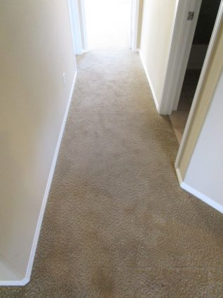Brown loose and buckled carpet in hall after stretching carpet